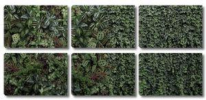 Зеленая стена растений
