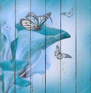 Каллас и бабочка
