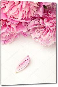 Розовые пионы и один лепесток