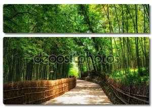 Небольшая дорога через бамбуковый лес