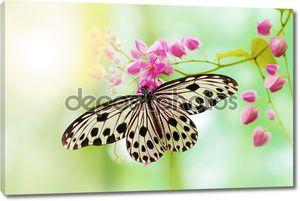 бабочка рисовой бумаги