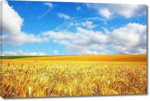 Сельский пейзаж пшеничного поля