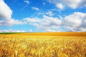 пейзаж сельского хозяйства