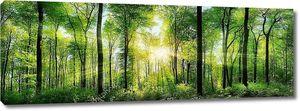 Лес в лучах солнца
