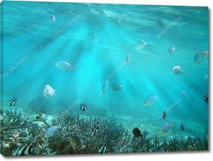 Царство тропических рыб