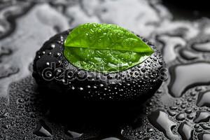 Zen камень и лист с каплями воды