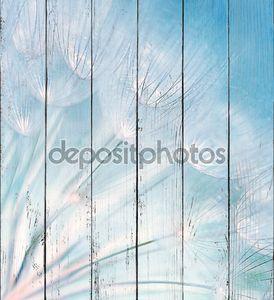 Абстрактный фон одуванчика