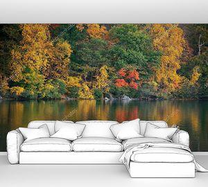 Осенняя красочная листва и природный ландшафт