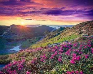 Цветы в горах на рассвете