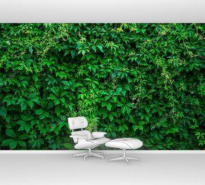 Зеленый фон виноградника