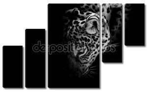 Черно-белый портрет ягуара