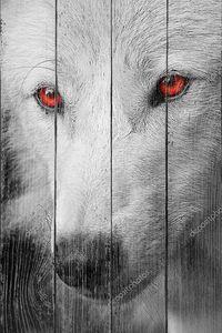 Белый волк с красными глазами