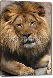 мужчина льва