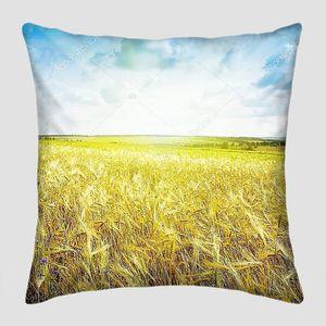 Спелая пшеница под голубым небом