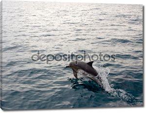 Дельфин прыжки из воды