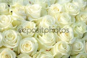 Группа белых роз, Свадебные украшения