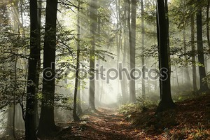 Лесная тропа в тумане