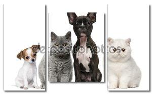 Группа собак и кошек перед белый фон