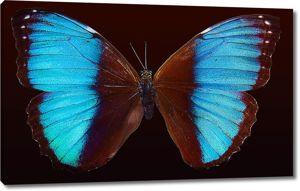 Амазонская бабочка