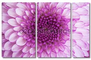 Крупным планом - центр фиолетовый цветок