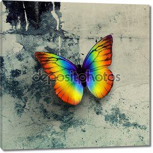 красочная бабочка