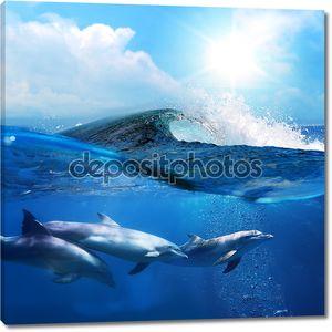 дельфины, плавающие под водой