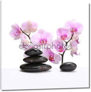 Цветок орхидеи с камнем