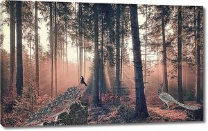 Павлины в сосновом лесу
