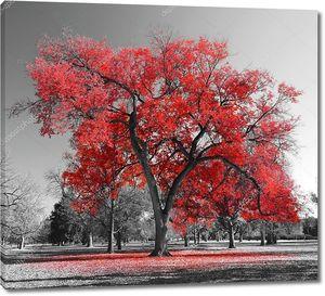 Большое красное дерево