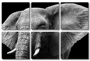 Голова большого слона