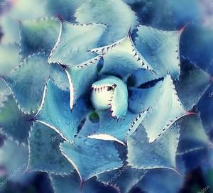 Необычный кактус