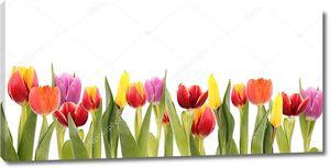 Тюльпаны весенние разноцветные