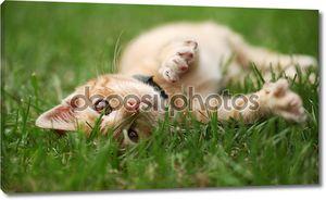 маленькая кошка в траве