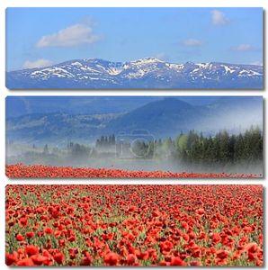 Луговой цветок мака в горах