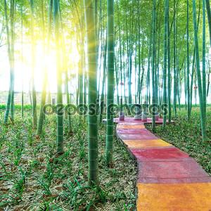 Бамбуковый лес Китая