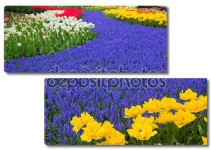 Синяя река цветы в саду Голландии