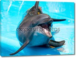 Гей Дельфин с рот открытым на синем фоне