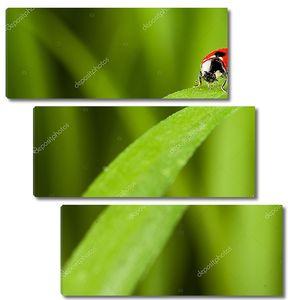 Божья коровка на стебле травы