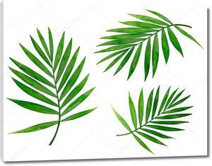 Белый фон с тропическими листьями