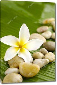 Плюмерия и лечебные камни