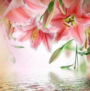 Разноцветные лилии над водой