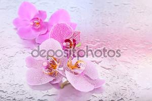 Желтые тропические орхидеи, изолированные на белом