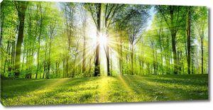 Яркое солнце в лесу