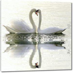 Любовь лебедей на воде