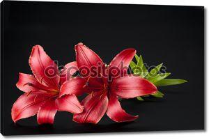 Великолепные красные лилии
