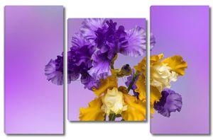 Цветы ирис на фоне