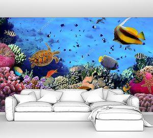 Кораллы в Красном море