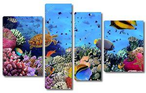 Изображение коралловой колонии на рифе, Египет