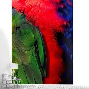 Оперенье попугая крупно