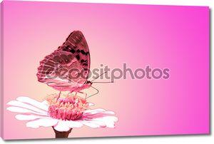 Бабочка на розовом  цветке